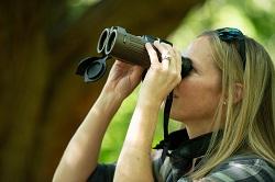 Bushnell Forge Binoculars